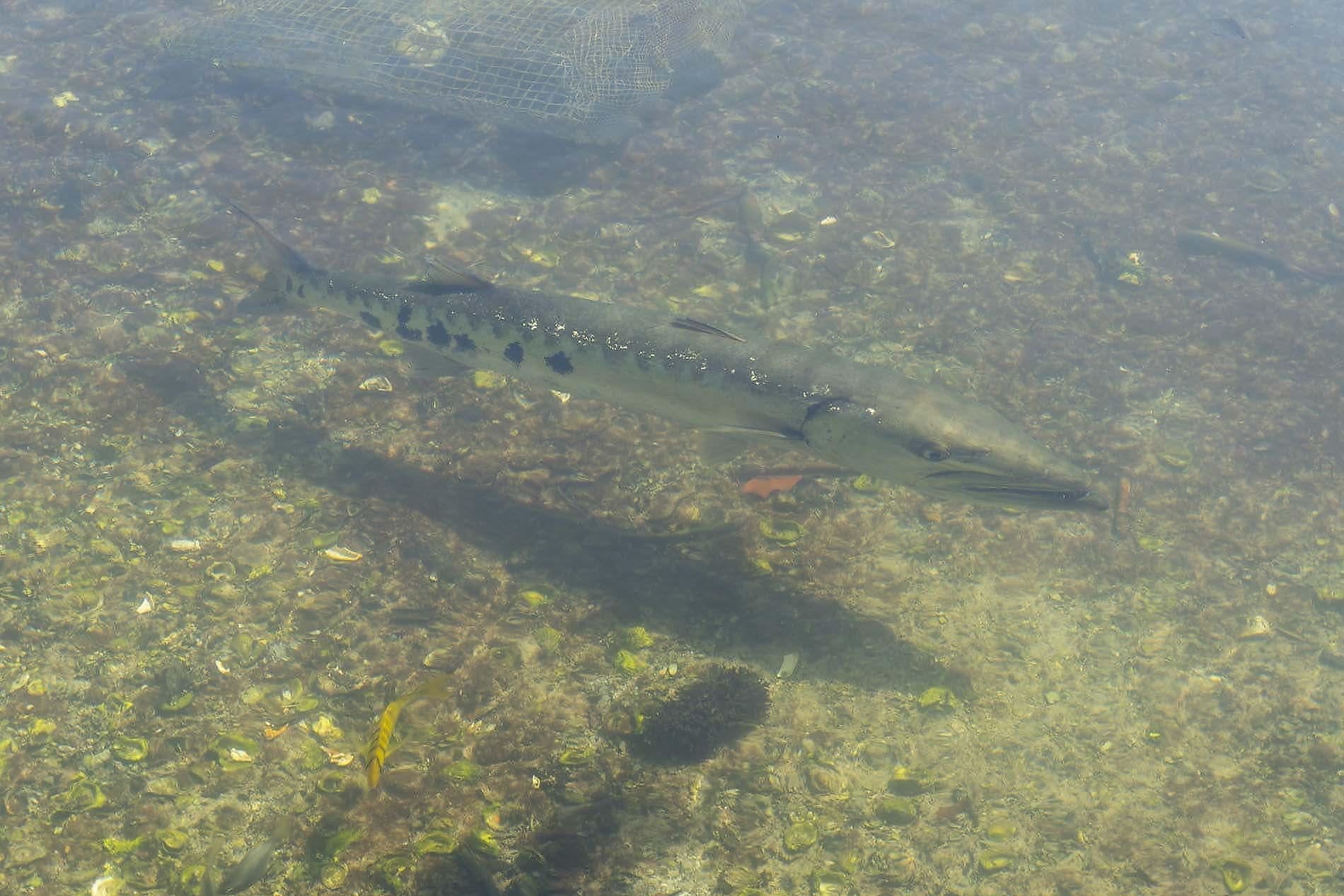 poisson ile maurice