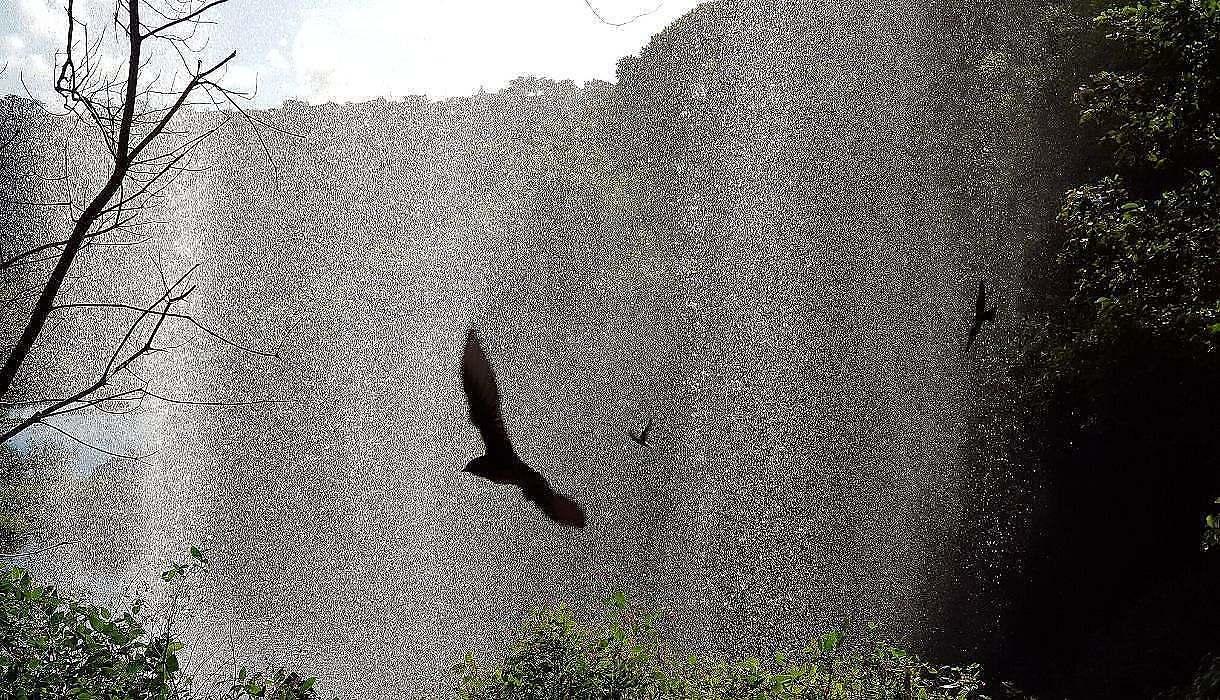 sous la cascade Mauritius