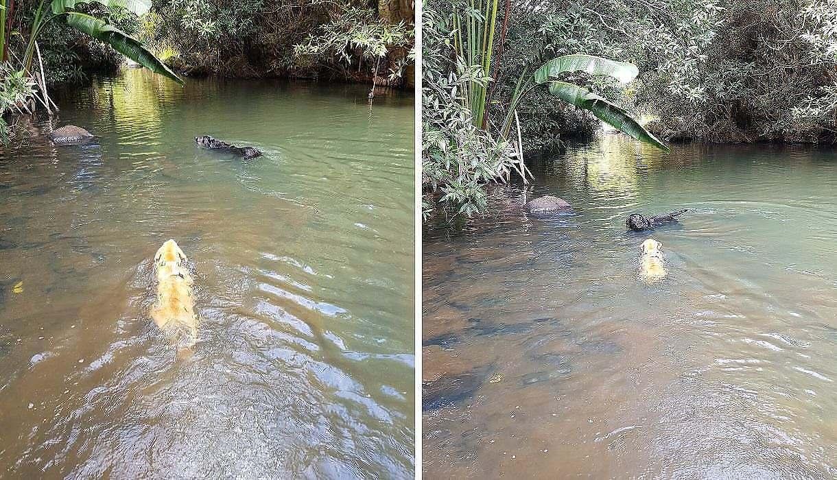chien se baigne