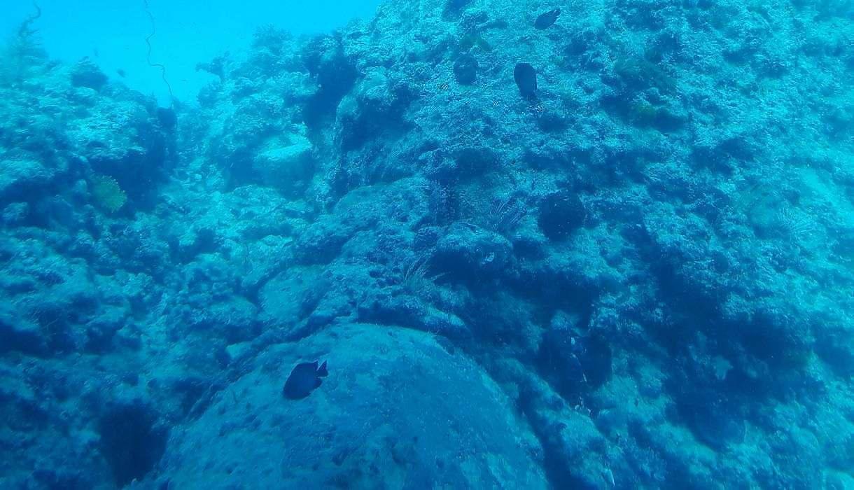 poisson sous marin ile maurice