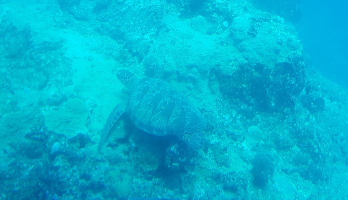 tortue sous marin ile maurice